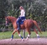 D-pony